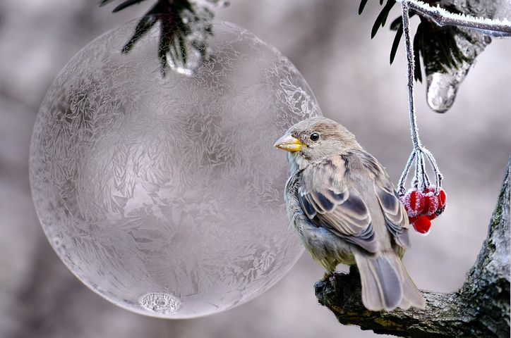 freezing bird